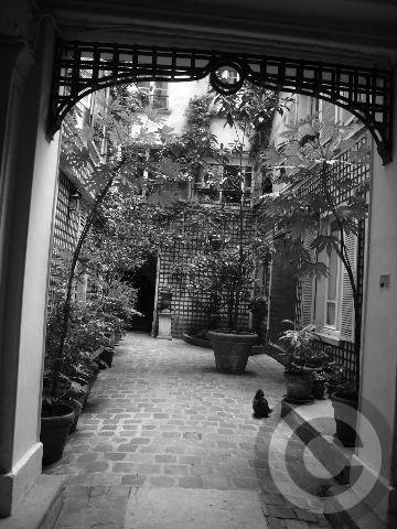 ■ウチの建物に新しい住人が(パリ)_a0008105_22462118.jpg