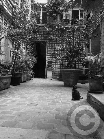 ■ウチの建物に新しい住人が(パリ)_a0008105_2246628.jpg