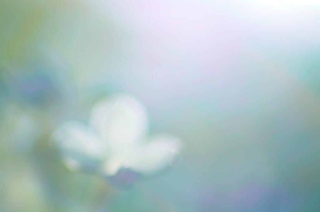くもりガラス            _f0033205_22525574.jpg