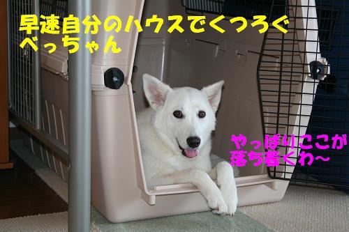 f0121712_1417433.jpg