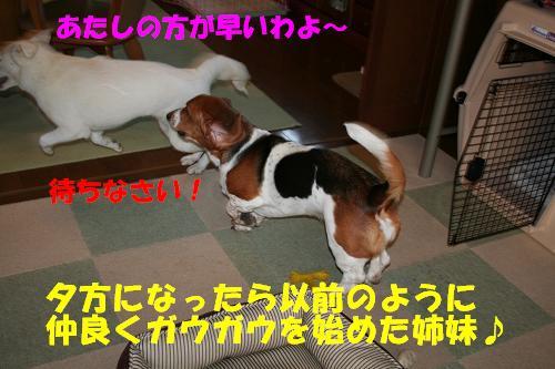 f0121712_1418996.jpg