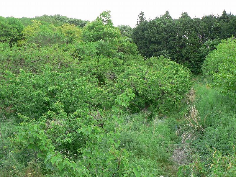 畑までの道のり・・そして・・・空_c0057415_1721110.jpg