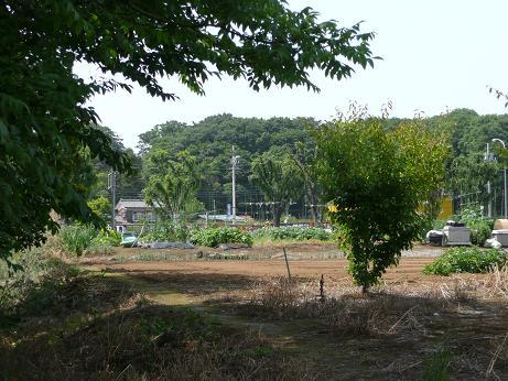 都会の田んぼ。田植えを見てきました。_a0050728_18125144.jpg