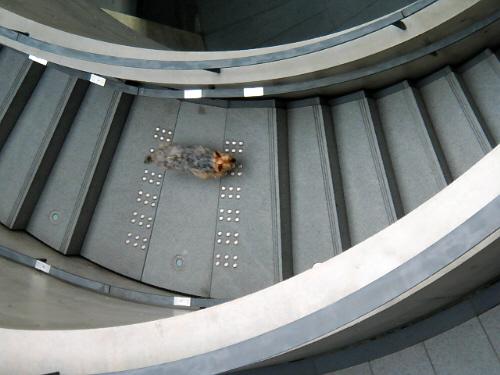 弧を描いている階段を駆け下りているラッキーの姿を上から見下ろして撮った一枚。階段の曲線とラッキーの背中が全部グレーの濃淡で面白い一枚です。