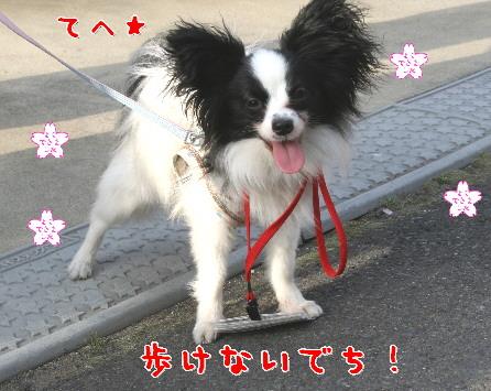 d0013149_22184014.jpg
