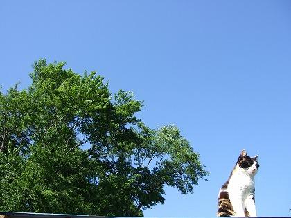 らふりぃの荒ら屋…ではなく東屋でまったり 21 [転載禁止]©2ch.netYouTube動画>1本 ->画像>925枚