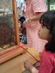 ユキちゃんと蜜蜂~農業祭り~_f0106597_16482269.jpg