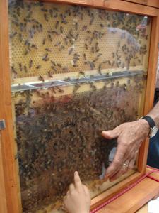 ユキちゃんと蜜蜂~農業祭り~_f0106597_1656439.jpg