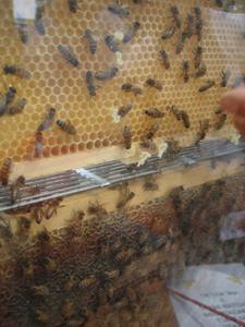 ユキちゃんと蜜蜂~農業祭り~_f0106597_16593175.jpg