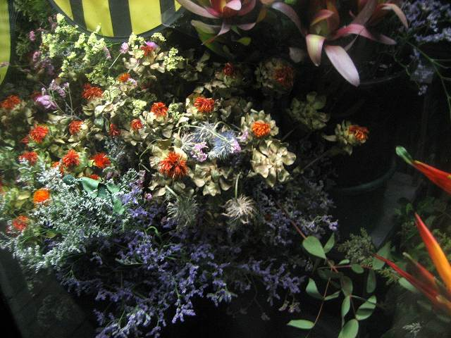 町の花たち_b0064411_17441825.jpg