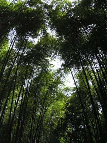 嵯峨野3 竹林の道_e0048413_21412213.jpg