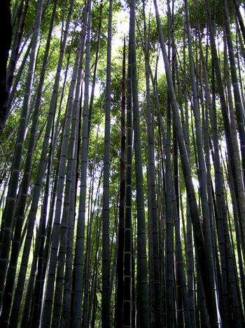 嵯峨野3 竹林の道_e0048413_21414284.jpg