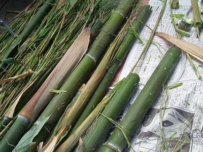 庭の黒竹で・・・。_e0054438_1838844.jpg