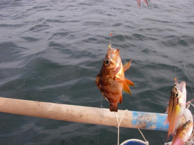 27日の三浦市での釣り その一_a0074069_1725528.jpg