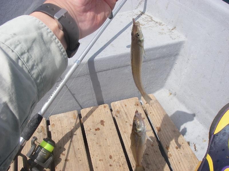 27日の三浦市での釣り その一_a0074069_1742339.jpg