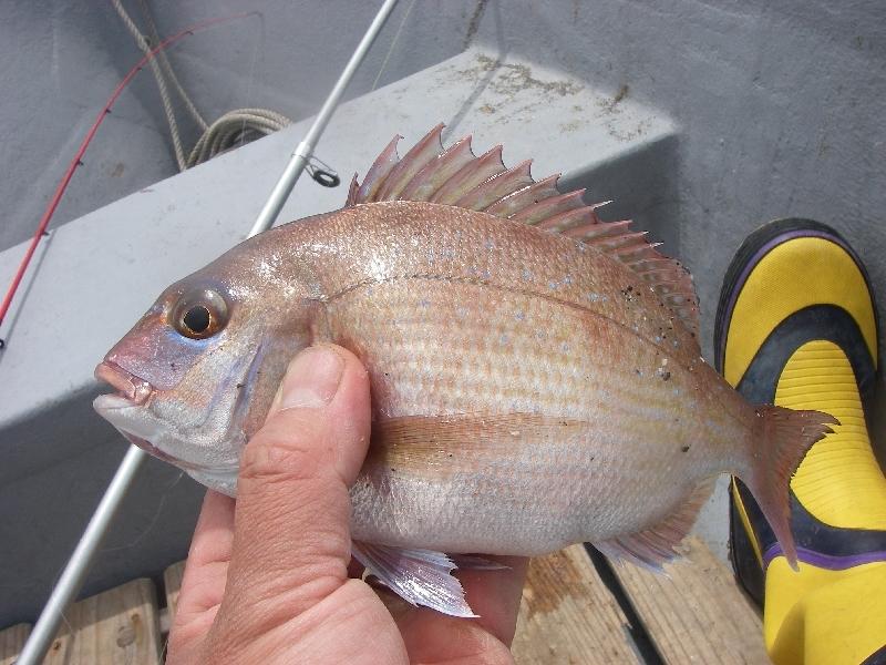 27日の三浦市での釣り その一_a0074069_176116.jpg