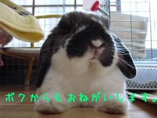 b0109692_20114443.jpg