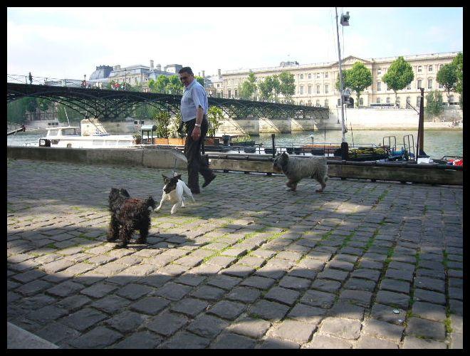 ■街角のワンコ(パリ)_a0008105_0455563.jpg