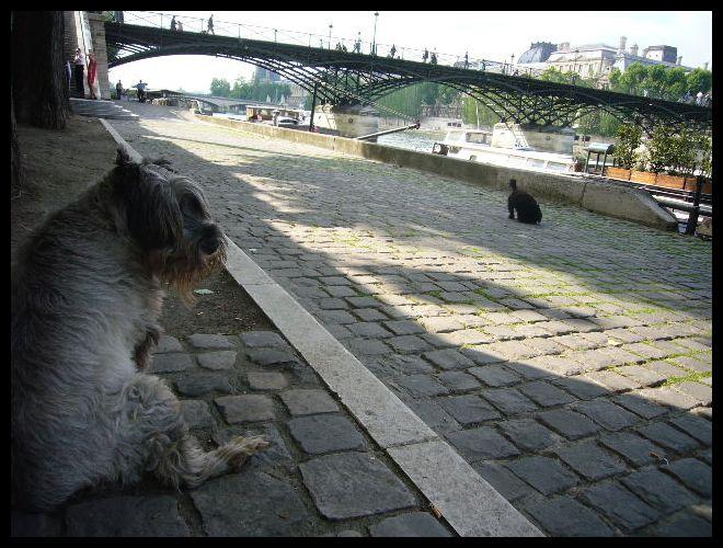 ■街角のワンコ(パリ)_a0008105_046166.jpg