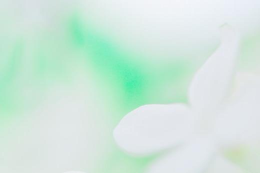 白いライラック_f0033205_919261.jpg