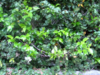 ちいさな庭の小さな自然_e0010418_17333066.jpg