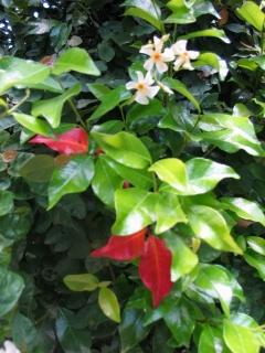 ちいさな庭の小さな自然_e0010418_17335234.jpg
