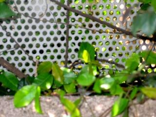 ちいさな庭の小さな自然_e0010418_17341245.jpg