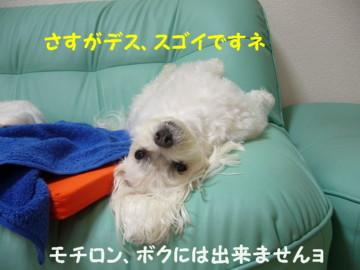 f0005727_1555234.jpg