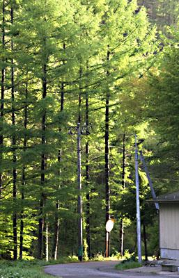 春・信州~雨上がる! 2007/05/26-sat-1_f0031535_16222149.jpg