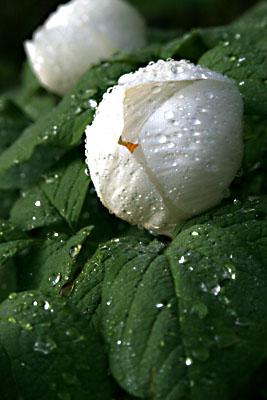 春・信州~雨上がる! 2007/05/26-sat-1_f0031535_16254872.jpg
