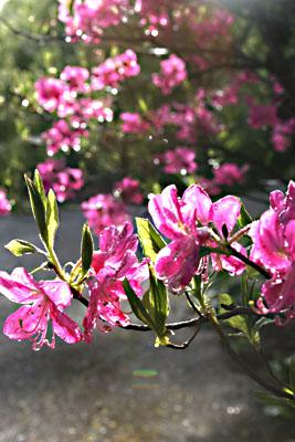 春・信州~雨上がる! 2007/05/26-sat-1_f0031535_1626109.jpg
