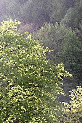 春・信州~雨上がる! 2007/05/26-sat-1_f0031535_16262494.jpg