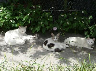 猫と初夏の空_e0080345_18233746.jpg