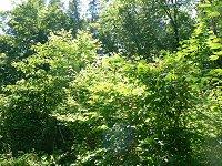 緑がまぶしい_f0019247_053671.jpg