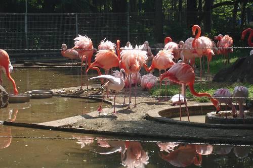 千葉市動物公園_e0000951_19311326.jpg