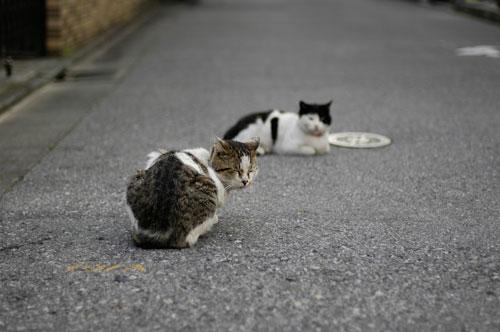 猫エイズ_d0084952_1724081.jpg