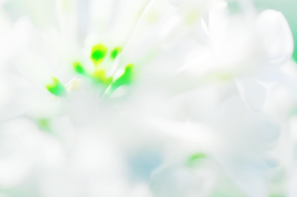 白いドレスを身につける花茎_f0033205_1264536.jpg