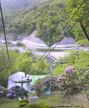 登山リフトのシャクナゲがきれいです。_c0089831_1640169.jpg
