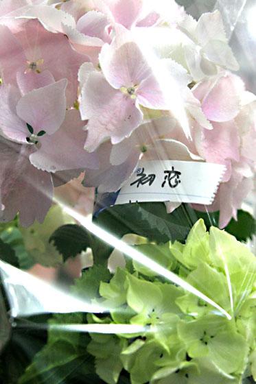 「初恋」という名の・・・ 2007/05/28-mon _f0031535_11365521.jpg