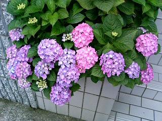 久しぶりの雷雨_a0004752_20141833.jpg