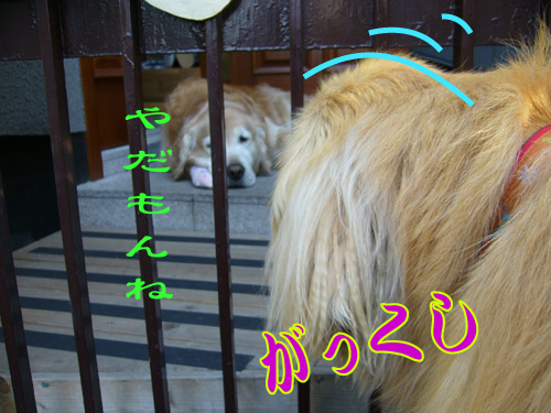 c0085188_22473295.jpg