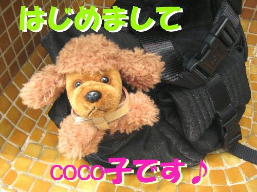 f0118293_20153981.jpg