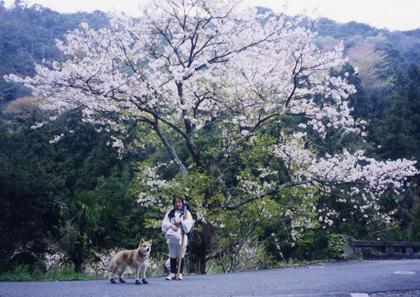春遍路 第2弾 ついに最終日_c0049299_743263.jpg
