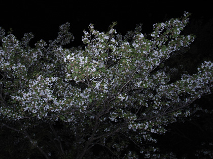 春遍路 第2弾 ついに最終日_c0049299_7443680.jpg
