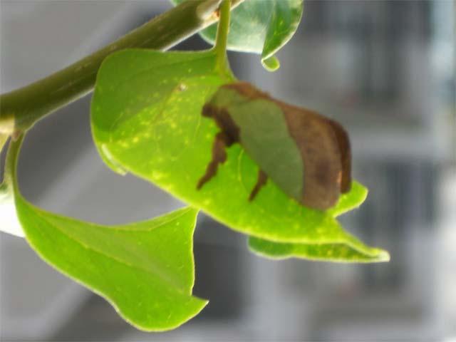 綺麗な緑色と茶色で まるで葉っぱにそっくりでした_b0025008_2217387.jpg