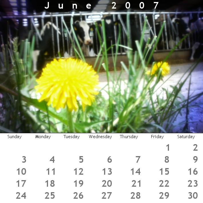 牛カレンダー 2007年6月号。_b0047734_065096.jpg