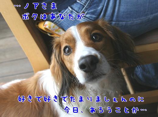 d0013149_011818.jpg