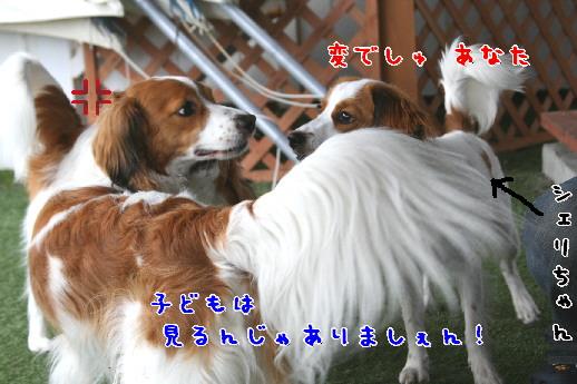 d0013149_038191.jpg