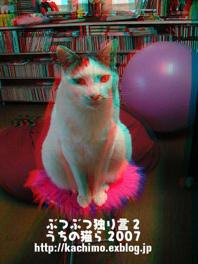 3D写真だよ。_a0028451_20223414.jpg