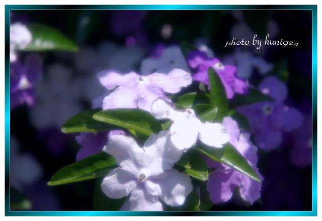 f0131365_1416368.jpg